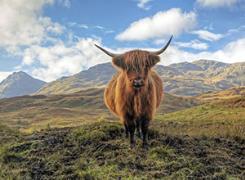BritRail Scottish Highlands Pass